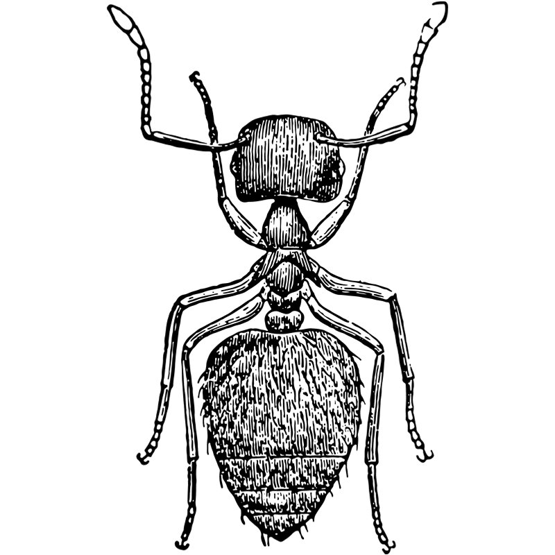 Insects - Ant Control - Exterminator in Nashville - Preventative Pest Control - Certified Pest Control