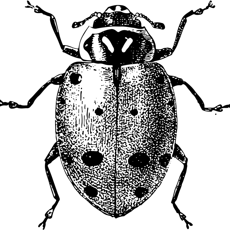 insects ladybug - Certified Pest Control