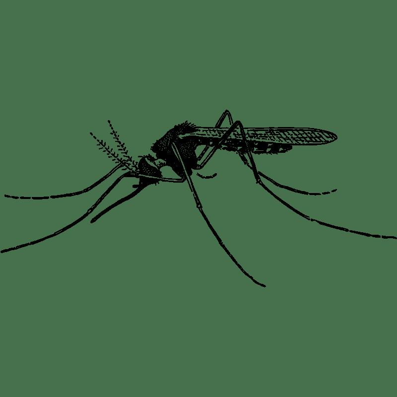 Mosquitoes - Mosquito Control - Exterminator in Nashville - Preventative Pest Control - Certified Pest Control