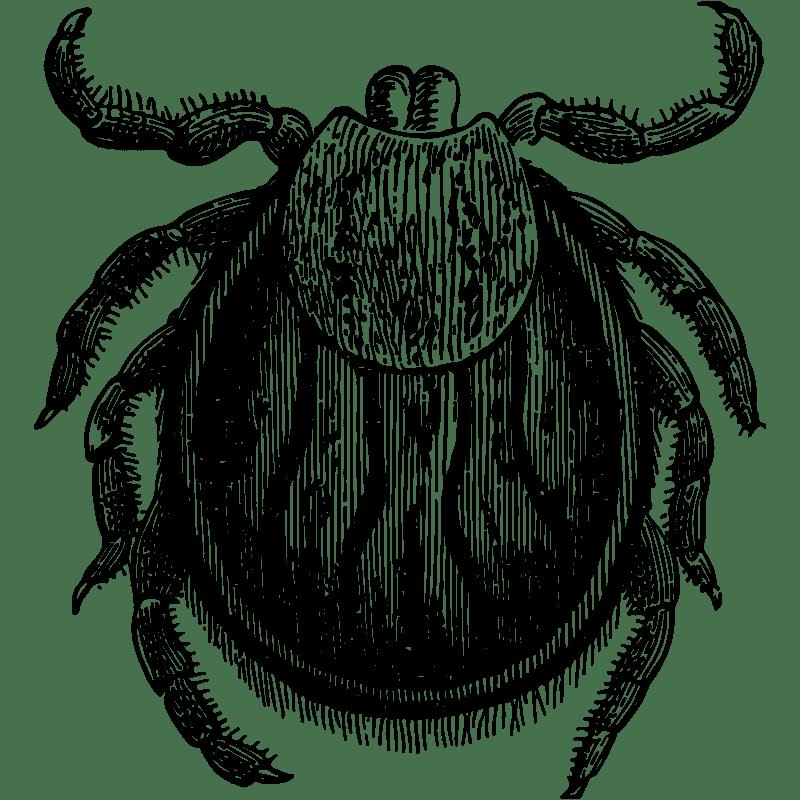 Ticks Control - Exterminator in Nashville - Preventative Pest Control - Certified Pest Control