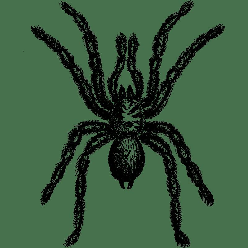 Trap Door Spider Control - Exterminator in Nashville - Preventative Pest Control - Certified Pest Control