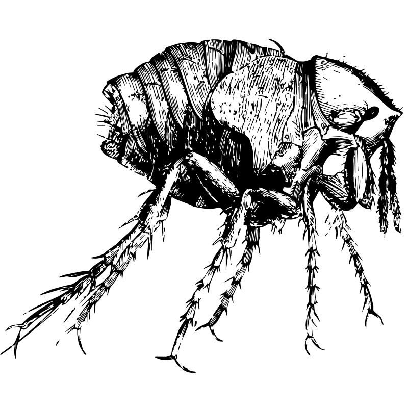 Chigger Control - Exterminator in Nashville - Preventative Pest Control - Certified Pest Control