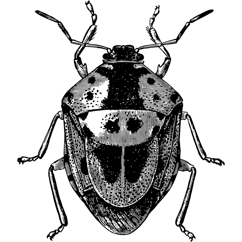 insects stinkbug - Certified Pest Control