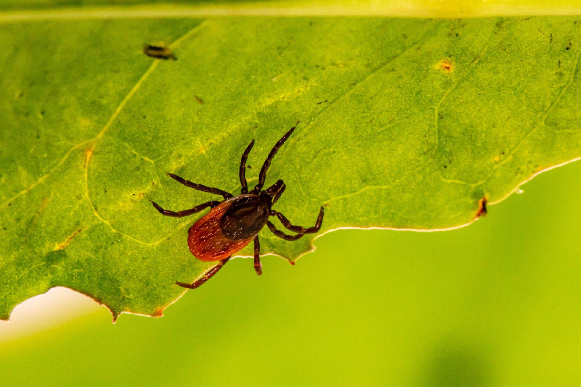 Tick Control in Nashville - Preventative Pest Control - Certified Pest Control