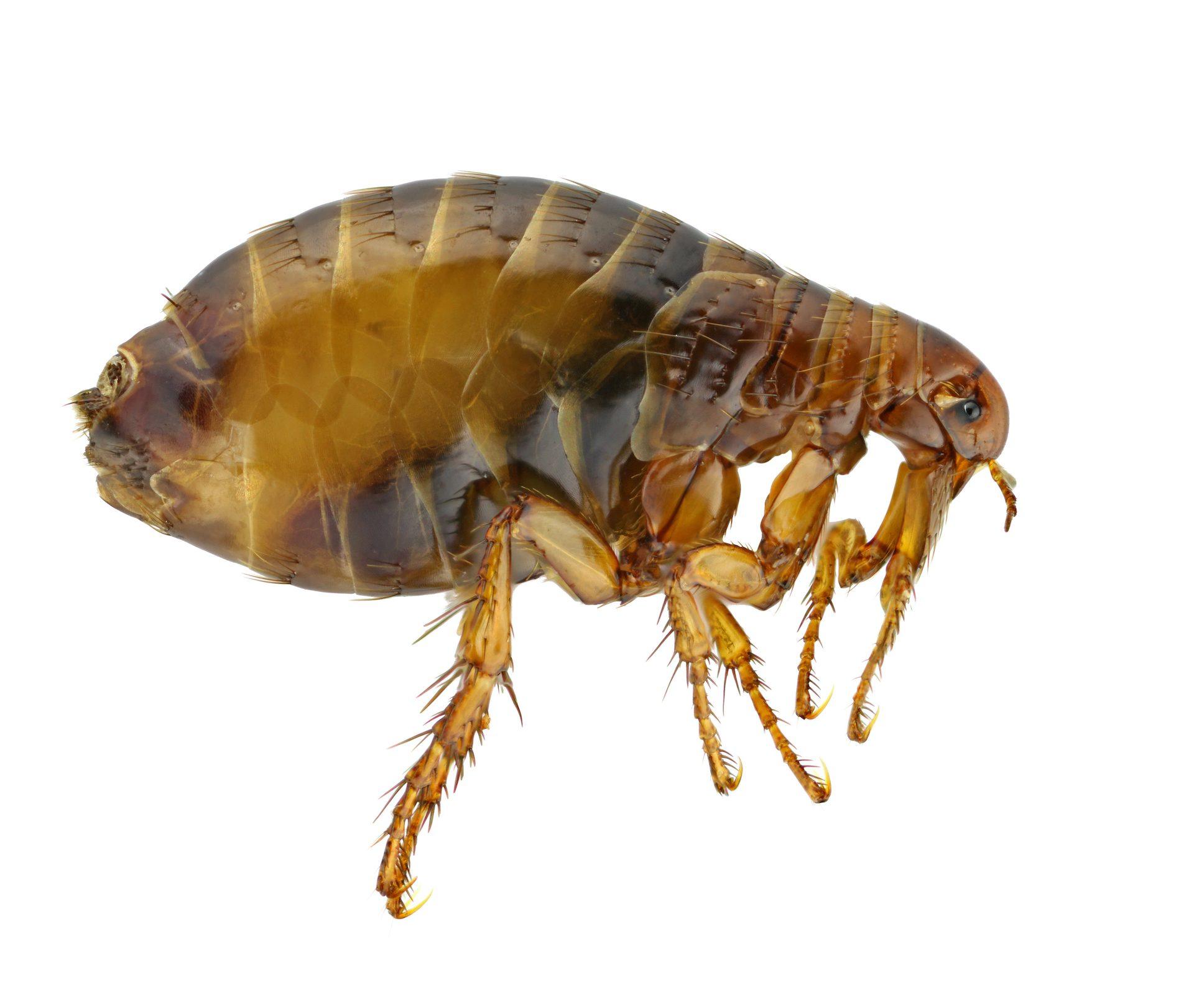 Pest Control in Nashville - Preventative Pest Control - Certified Pest Control