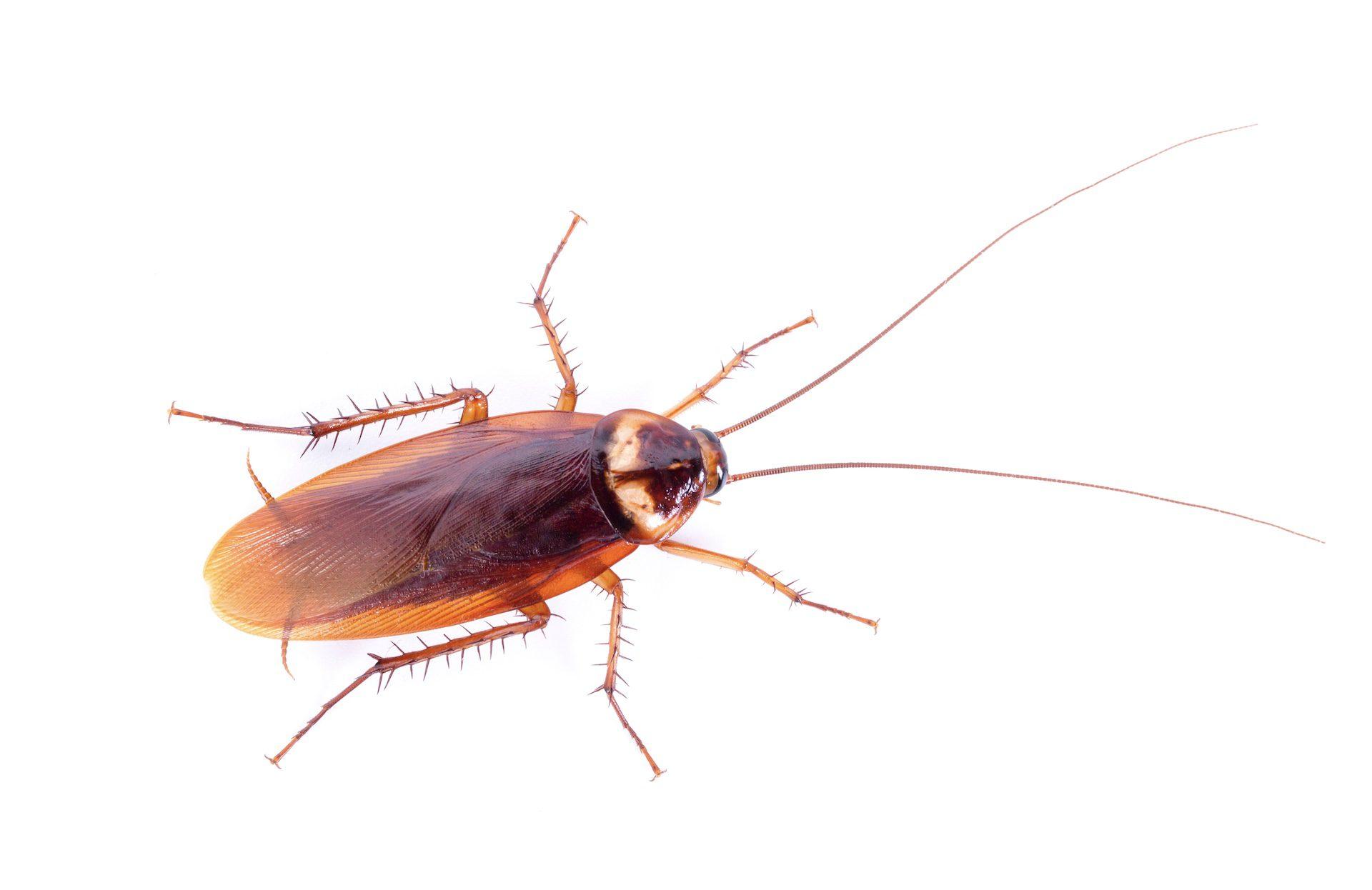 Roach Control in Nashville - Preventative Pest Control - Certified Pest Control