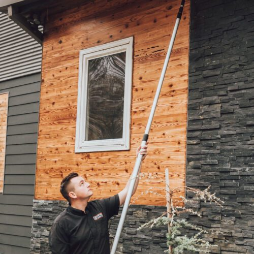 Wasp Nest - Exterminator in Nashville - Preventative Pest Control - Certified Pest Control