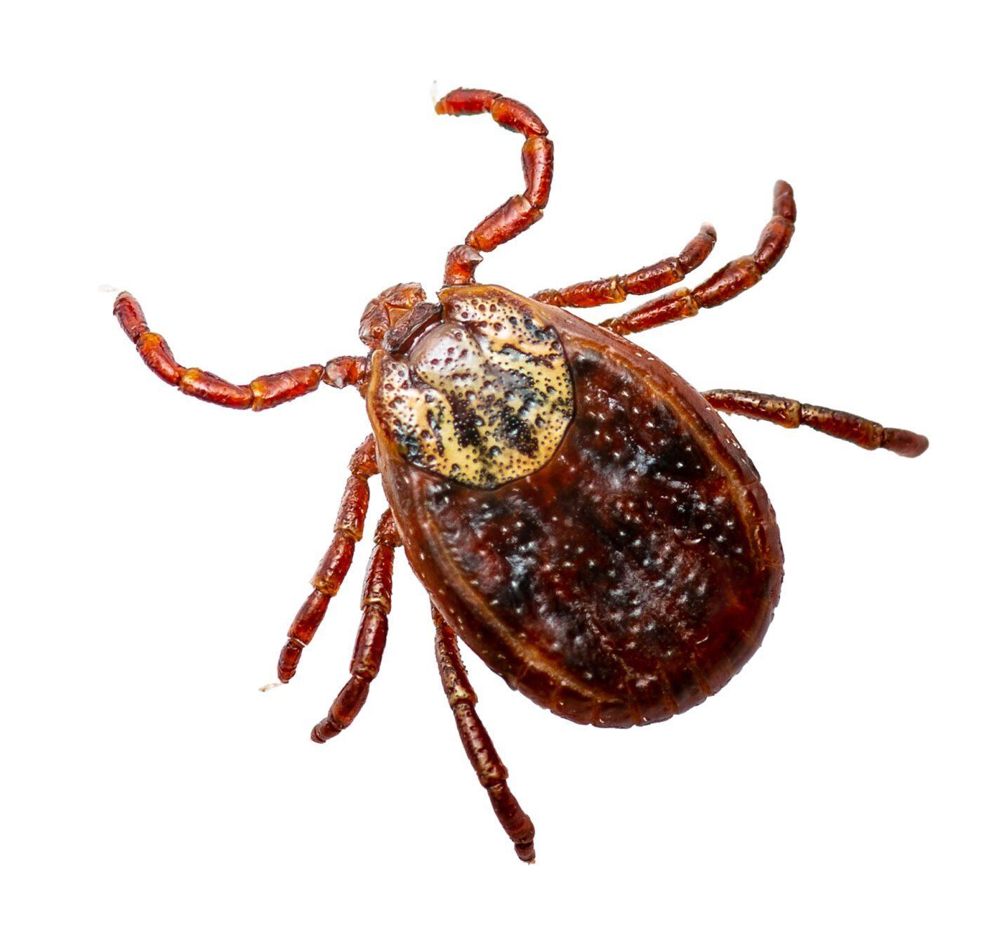 Pest Control Services - Tick Control, Mosquito Control, Chigger Control, and more - Preventative Pest Control in Nashville - Certified Pest Control