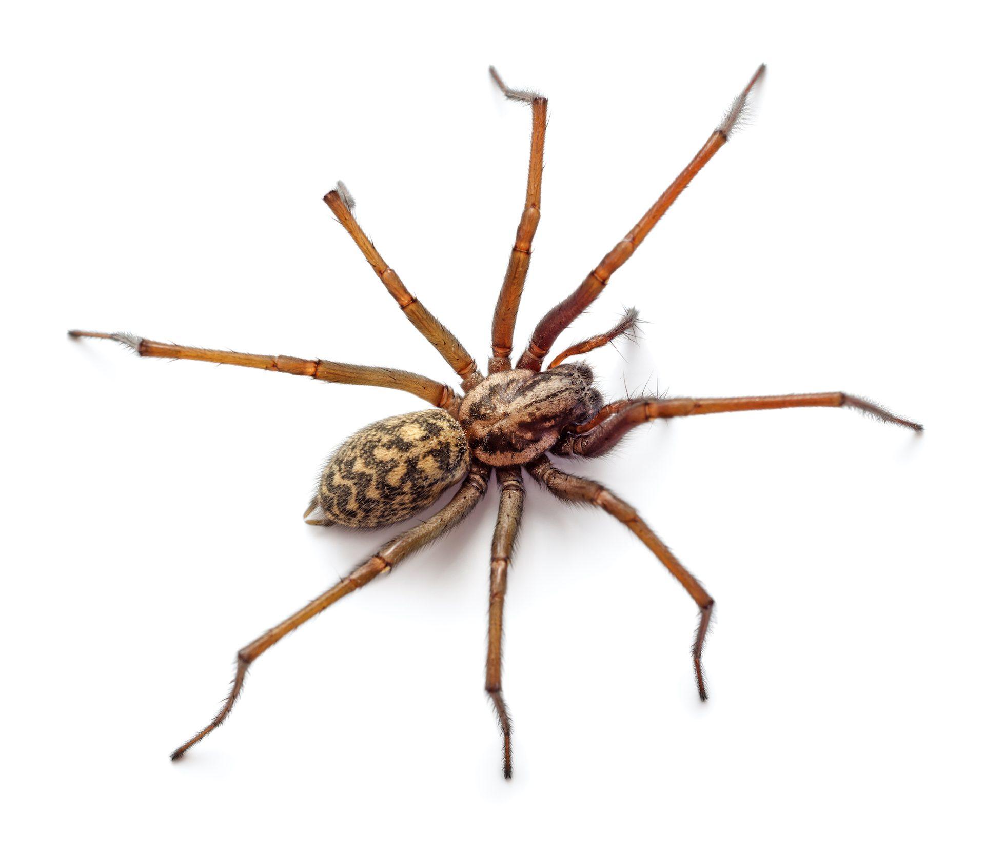 Big Spiders Control - Exterminator in Nashville - Preventative Pest Control - Certified Pest Control